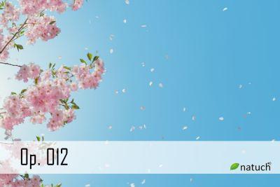 Op_012.mp3 楽曲イメージ